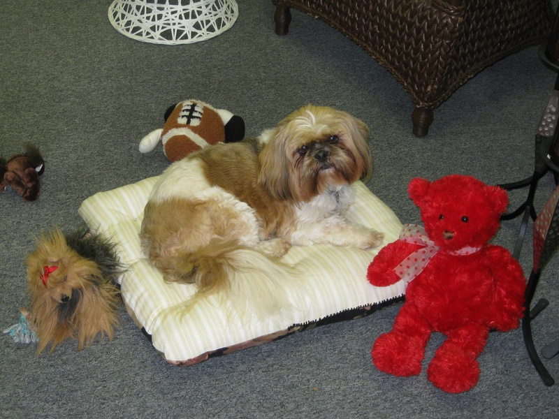 Yo-Yo Ma on his bed with his stuffed animals (which he shop-lifted)