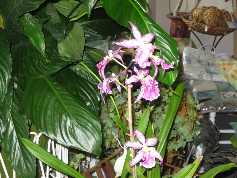 Live Exotic Orchid